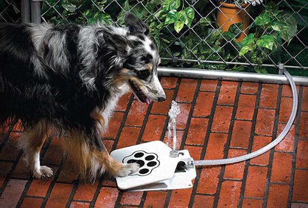 Doggie Fountain