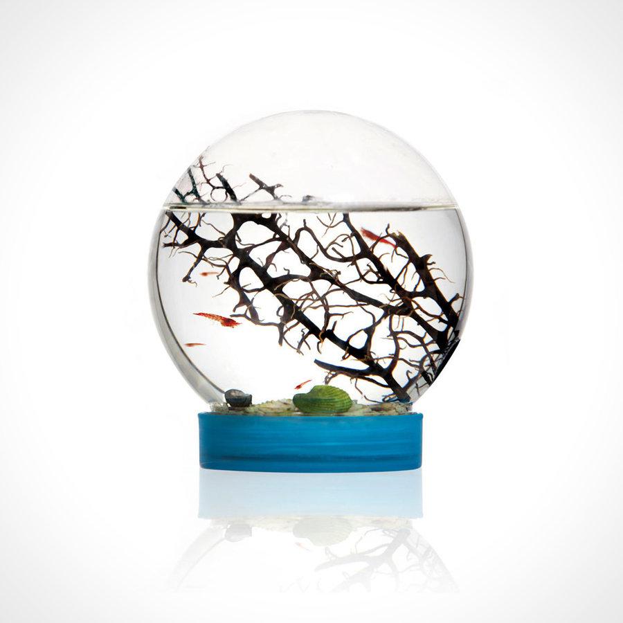 eVivo Baby Shrimp Ecosystem