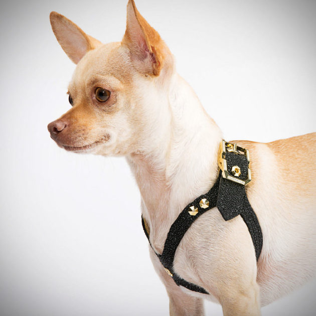 Brikk Lux Buddy Belt Dog Harness