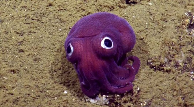 Googly-Eyed Squid Is So Cute That It Could Be Mistaken For A <em>Pokémon</em>