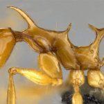 Newly Discovered Ants Named After <em>Game Of Thrones</em> Dragons
