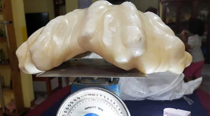 Greatest Fisherman's Haul: A Giant Clam-produced Pearl Worth $100M