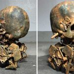 Skull Walker 2.0: Mechanical Creepy Crawly With A Skull Fit For Nightmare