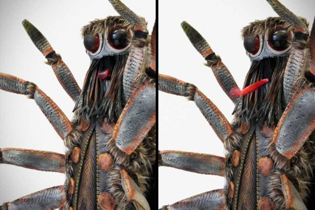 Realistic Spider Insect Costume by Tentacle Studio