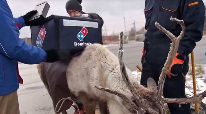 Domino's Used Reindeer To Deliver Pizza