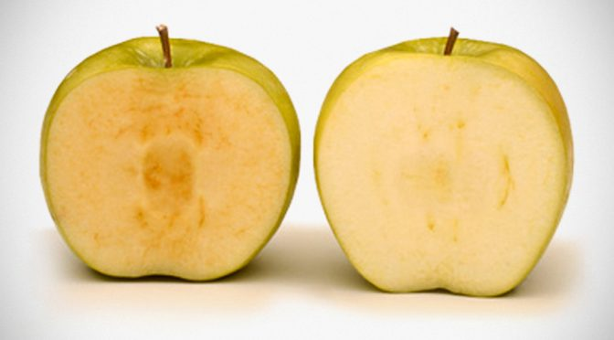 Thanks To Genetic Modification, Arctic Apples Will Not Turn Brown