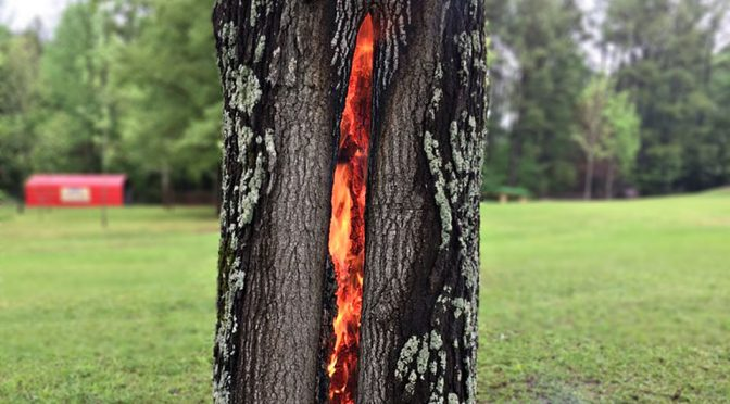 Tree Burning From The Inside Looks Absolutely Like LOTR's Eye of Sauron