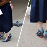 Realistic Pigeon Shoes Freak Out The Internet, But Not The Pigeons