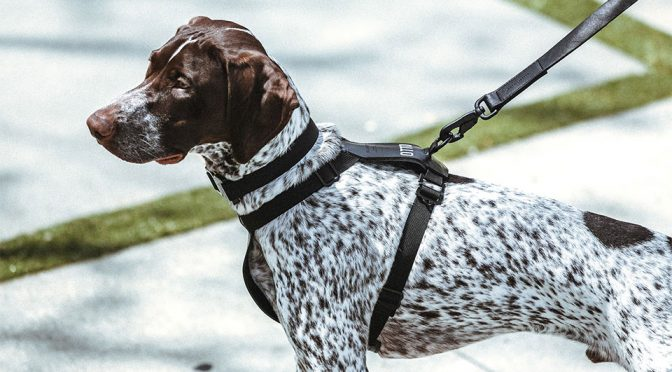 KILLSPENCER Introduces Handcrafted Leather Accessories For Dogs
