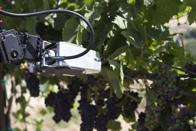 Digital Harvest Remote Operated Vineyard Robot