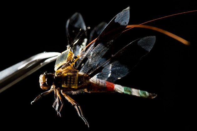 Charles Stark Draper Laboratory Cyborg Dragonfly