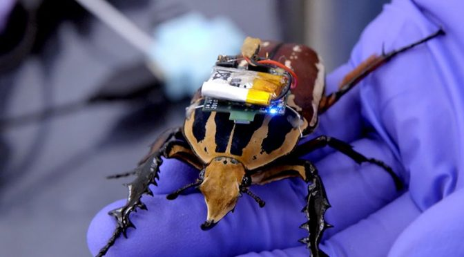 Cyborg Beetles Could Join Cyborg Dragonfly In Saving Lives In Future