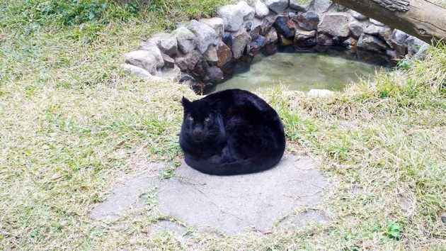 Black Panther Curled Up Tightly at Hirakawa Zoo Kagoshima