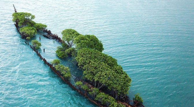 Trees Growing On Abandoned Ship Is A Reminder Of Nature's Resilience