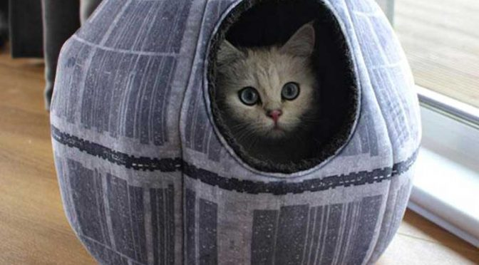 Now Dear Kitty And Fido Can Also Rest Inside The Most Dangerous Space Station In The Galaxy