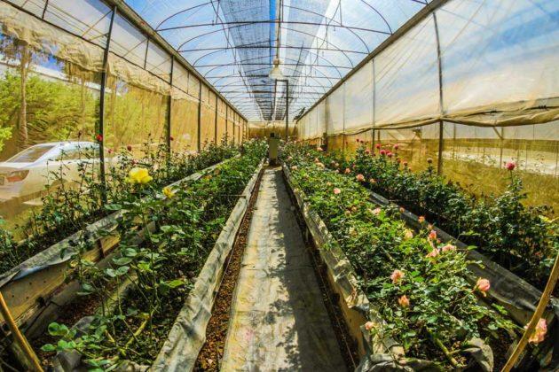 Gardening Tips Enhanced Greenhouses