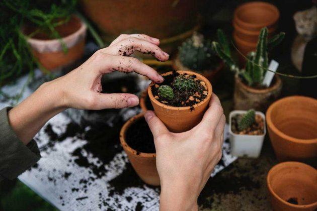 Gardening Tips Make Pot Light