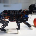 Meet Petoi, A Life-like DIY Robotic Cat Designed For STEM Education