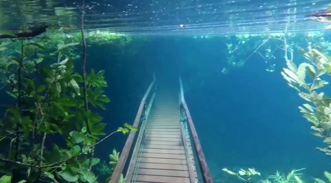 Submerged Trail in the Rio Prata Ecological Recto