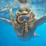 Alien Facehugger Snorkel Mask Because, <em>Aliens</em> Love The Sea?