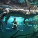 Cage Of Death Lets You Get Up Close With Crocodile <em>In The Water</em>