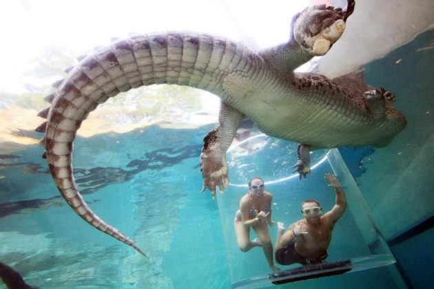 Crocosaurus Cove Cage of Death