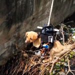 You Be The Judge Of Whether This Puppy Was Saved By A Drone