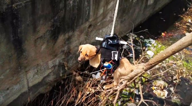 Puppy Rescued From Canal With A Drone