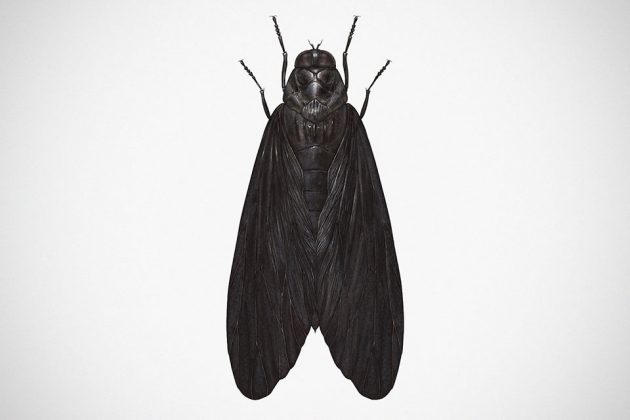 Star Wars Insects Prints by Richard Wilkinson