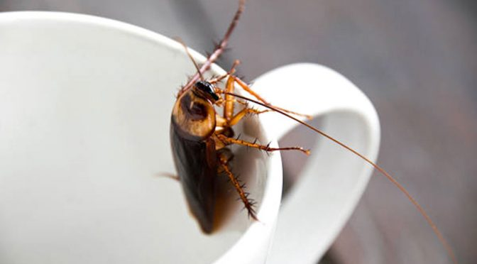 Cockroach Milk Is A Superfood? Nah, Think I Will Give It A Pass
