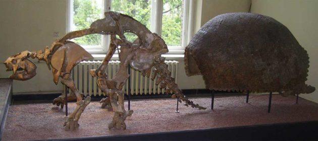 Glyptodon Dinosaur-Age Armadillo