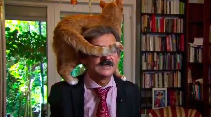 Academic Unfazed By Cat On His Shoulders, Get On With Interview