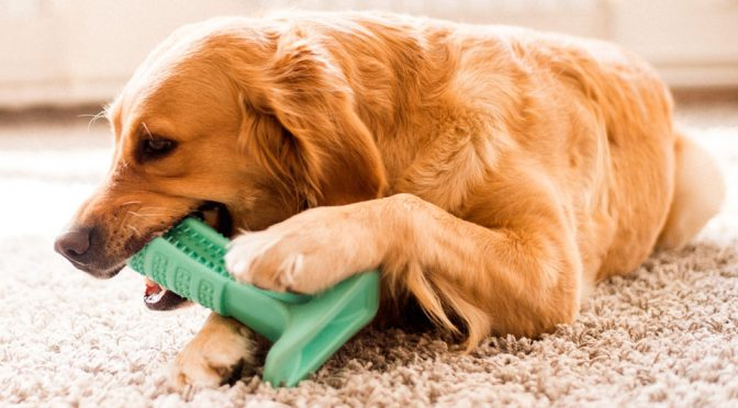 With Bristly, Your Dogs Can Finally Brush Their Own Teeth