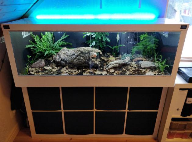 Ikea Kallax Shelves Bioactive Terrarium