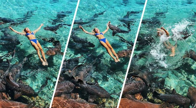 Model Poses With Sharks Got Attacked
