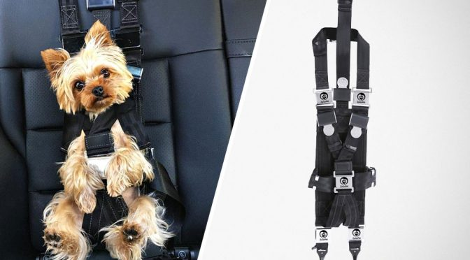 This Rocketeer Is Not A Jetpack. It Is A Car Safety Harness For Dogs