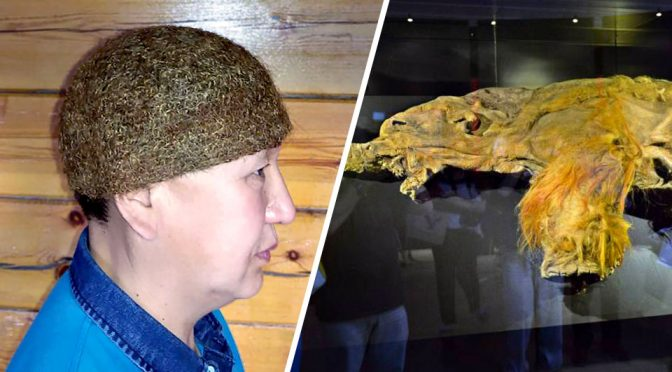 Mammoth Carcass Found In Siberia Had Its Hair Made Into A Hat