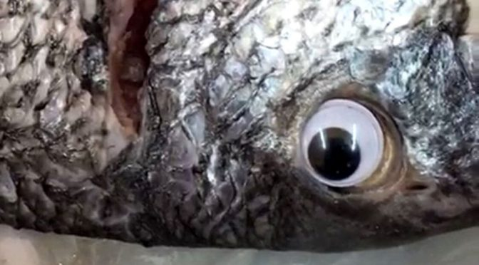 Fresh Fish Look With Googly Eyes