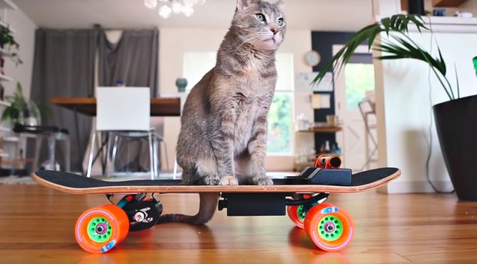 Designer Built An Electric skateboard That His Cat Can Control