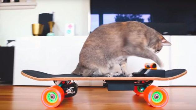 Kim Pimmel DIY Pet Cat Electric Skateboard