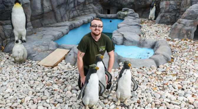 A Small Zoo In UK Had To Use Fake Plastic Penguins Due To Shortage