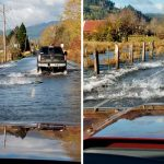 Salmon Took Advantage Of Flooded Road To Migrate To The Other Side