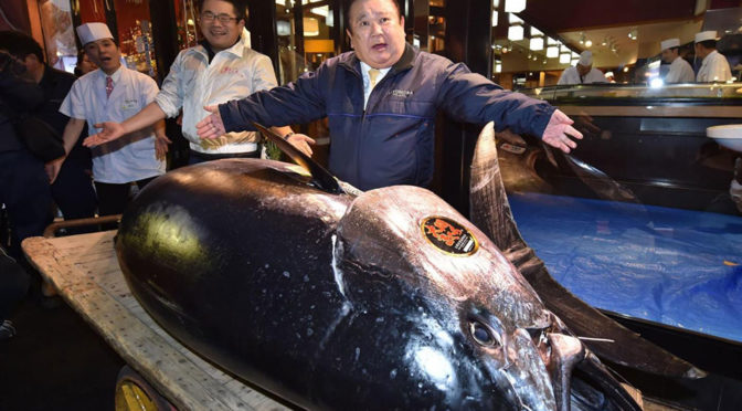 Japan's Tuna King Paid A Record $3.1 Million For An Enormous 612-Lb Tuna
