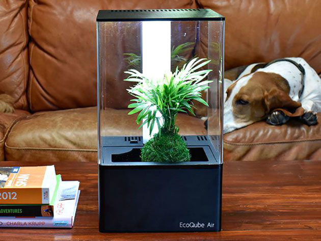 EcoQube Air Desktop Greenhouse Air Purifier