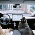 """Tesla """"Dog Mode"""" Keeps Dog(s) Safe And Cool When You Step Out Of The Car"""