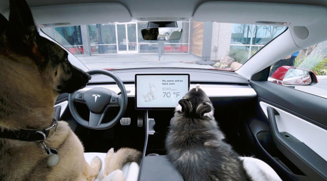 "Tesla ""Dog Mode"" Keeps Dog(s) Safe And Cool When You Step Out Of The Car"