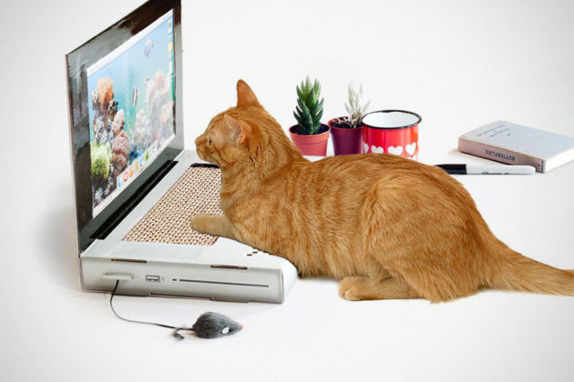 Cat Scratch Laptop Is For Dennis Of The Cat's World With A Thing For Laptop