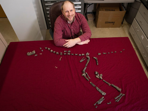 3-foot Tall Cousin of T-Rex Found
