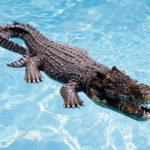 I Am Sure Floridians Will Not Be Amused By This Floating Crocodile