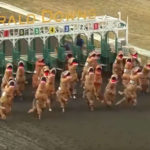 Believe It Or Not, T-rex Racing Is A Thing And We Are Not Even Talking About Prehistoric Time